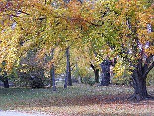 Buk lesný - les
